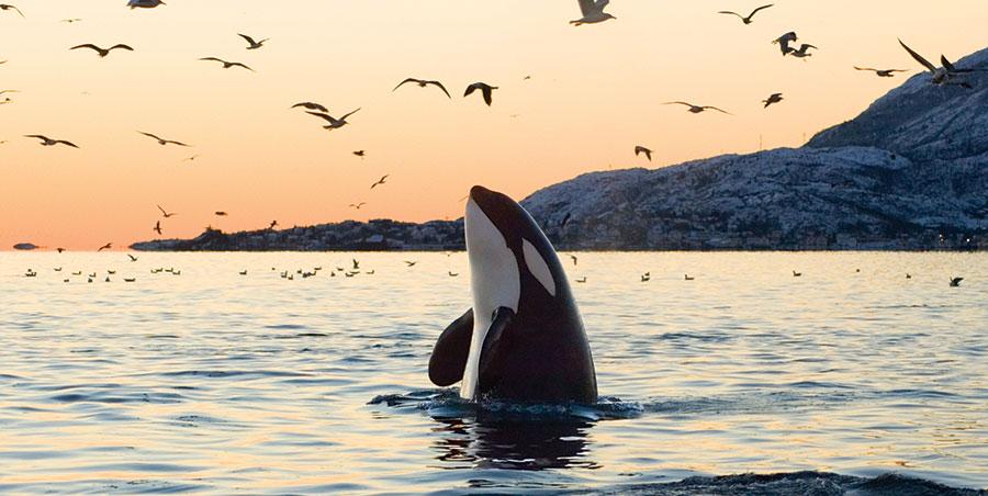 La historia de las Orcas   Blog de Crea-t   Centro de Psicología, Coaching y Desarrollo Personal en Las Rozas