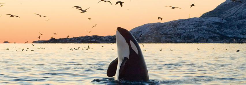 La historia de las Orcas